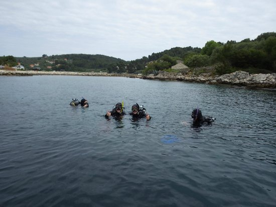 Croatia Divers Vela Luka: Fish in water