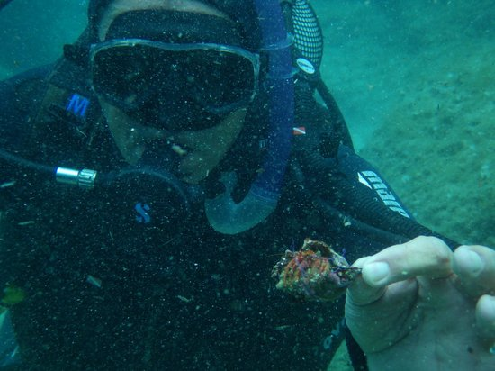 Croatia Divers Vela Luka: John has Crabs!!