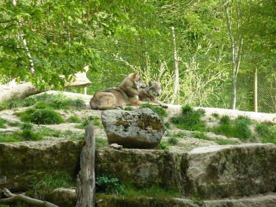 Parc Animalier de Sainte-Croix : Loups gris