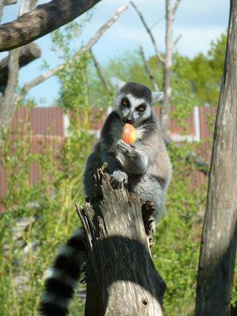 Parc Animalier de Sainte-Croix : Maki kata