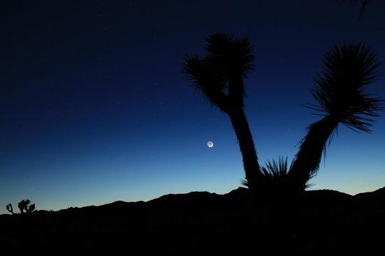 Sunnyvale Garden Suites Hotel - Joshua Tree National Park: The desert views