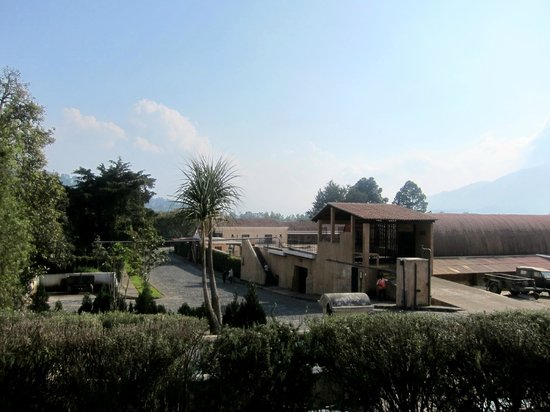 Finca Filadelfia Coffee Resort & Tours: View from the cafe of the grounds