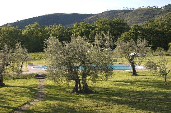 Agriturismo La Sosta di Annibale : Piscina fra gli olivi