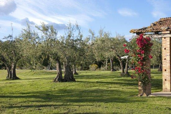 La Sosta di Annibale: Panoramica su olivi