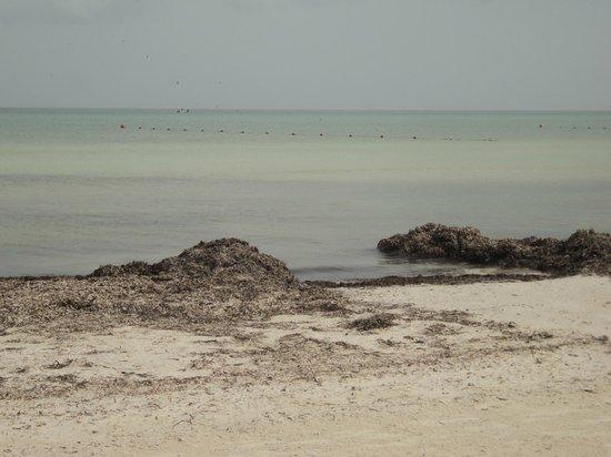 Villas HM Paraiso del Mar: La entrada al mar. Así estaba de algas