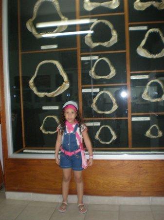 Museo Marino de Margarita : Mandibulas de tiburon
