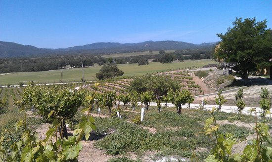 Christopher Joyce Vineyard and Inn: The view from our deck