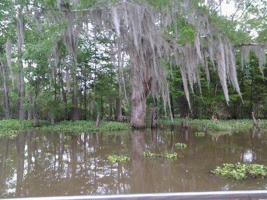 Cajun Jack S Swamp Tours