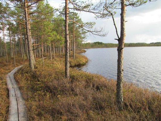 Rouge, Estonia: озеро посреди болота