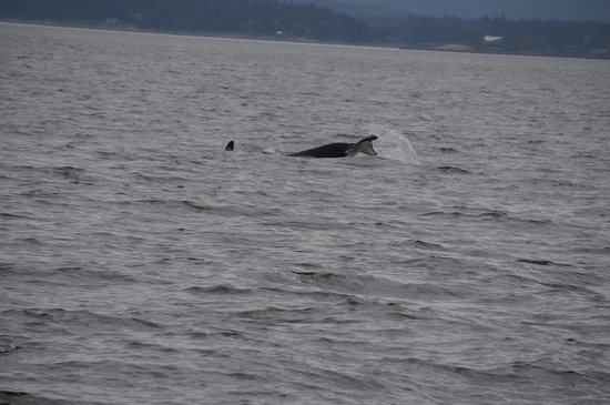 Lakedale Resort at Three Lakes: Whale watching in town