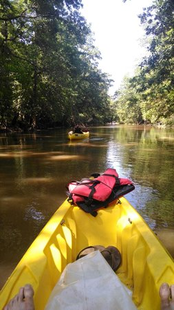 Bayou Teche Experience: Secluded canal is beautiful