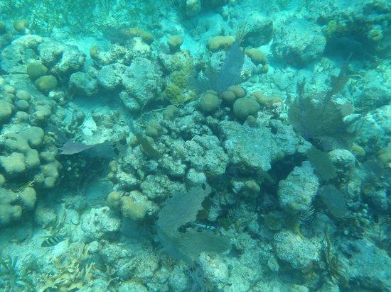 Tsunami Adventures: Coral reef Belize 2014