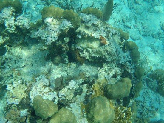 Tsunami Adventures: Coral reef Belize Apr. 2014