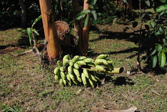 Hostal Aukara Rapa Nui: Jardín
