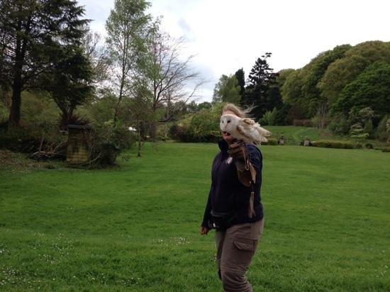 Muncaster Castle: owl demonstration