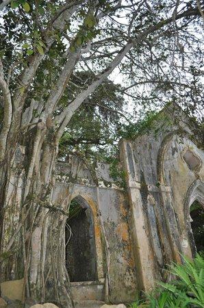 Palacio de Monserrate: Increíbles jardines
