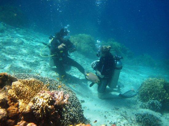 Ocean Dreams Pemuteran: Diving