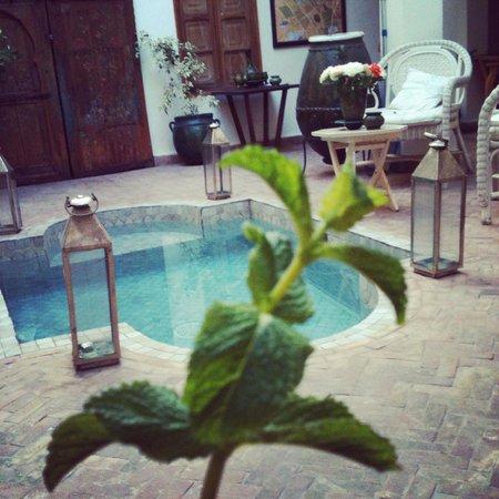 Riad le coq berbere: L'ingresso... e un rametto della menta fresca usata per il tè di benvenuto