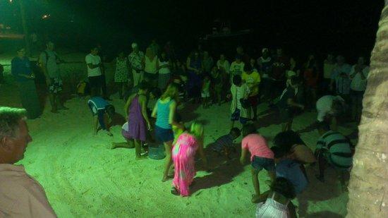 Bananarama Beach and Dive Resort: Crab race on the beach on sundays.