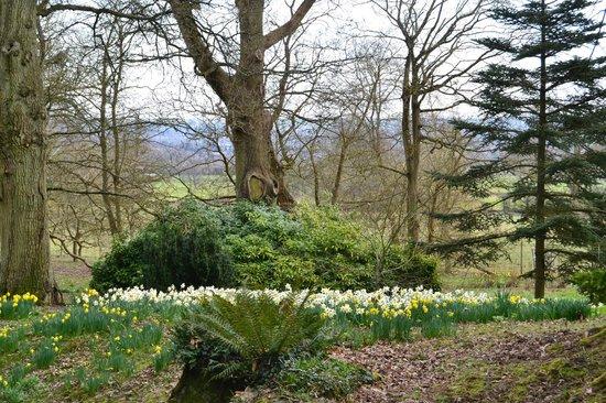 Batsford Arboretum: Daffodil time