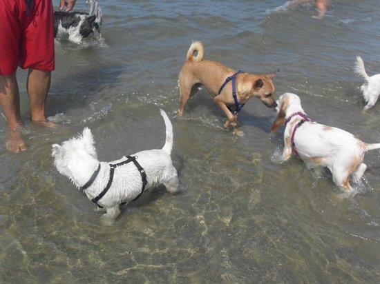 Casal Borsetti, Italy: tutti a giocare in acqua