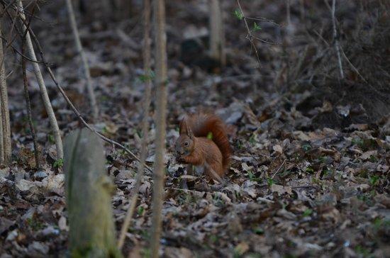 Tiergarten: Der er heldigvis plads til dyrerne.