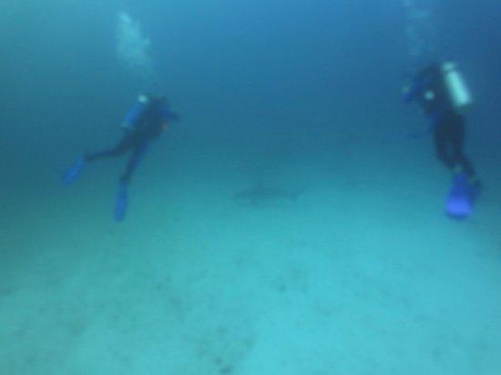 Eagleray Tours : Escuela tiburones martillo