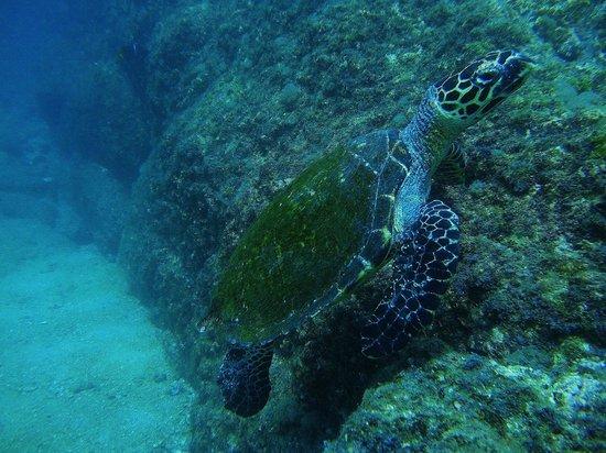 El Refugio Guanacaste Ecotours: tortue