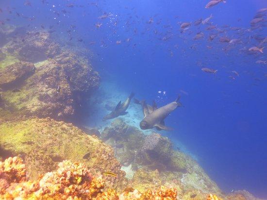 Eagleray Tours: Lobos de mar