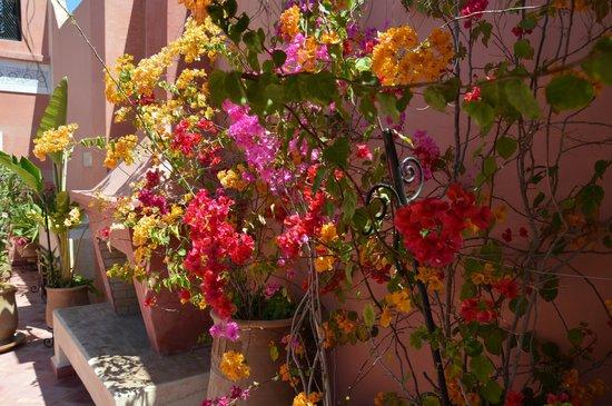 Riad Alili: Fleur terrasse 1
