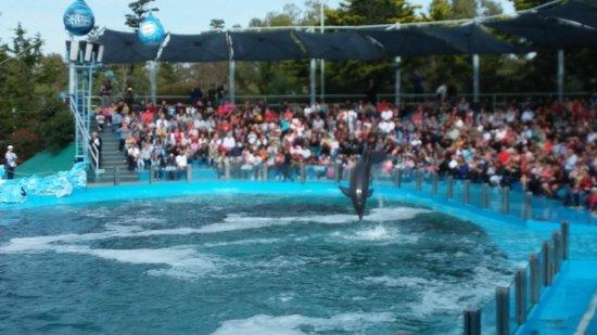 Mundo Marino: Delfin