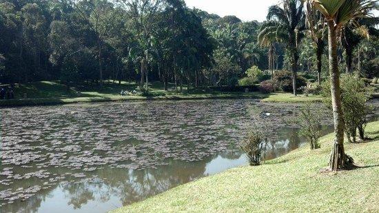 Jardim Botânico de São Paulo : Lago
