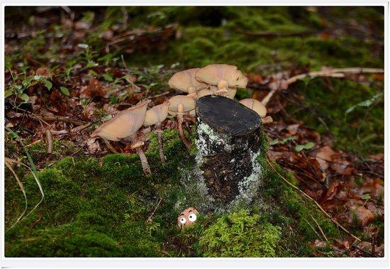 Eibsee: ceppo di funghi