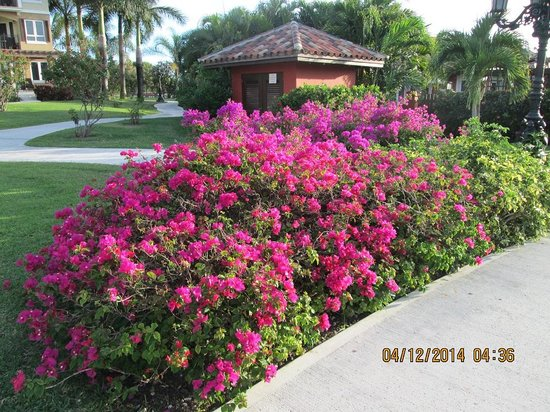 Sandals Grande Antigua Resort & Spa : Grounds are very well kept