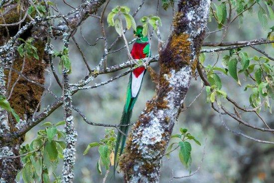 Diego Birding & Nature Day Tours: Male Quetzal