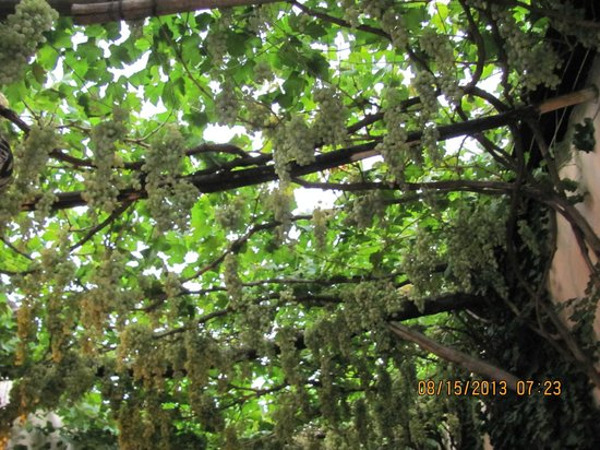 Caravan : Thick grapevines in front of the restaurant