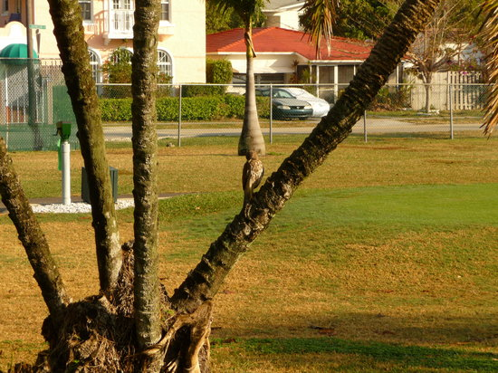 Hollywood Beach Golf Resort: Golf Course Nature