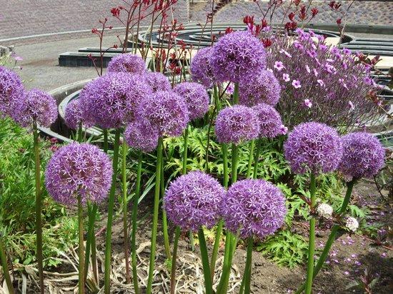 The Getty Center: Pretty Flowers In Garden