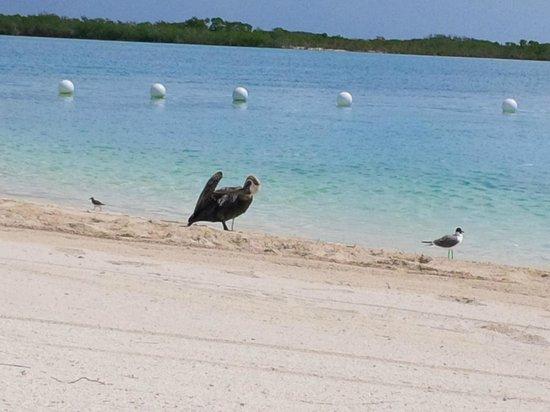 Blue Haven Resort : Birds on the beach....