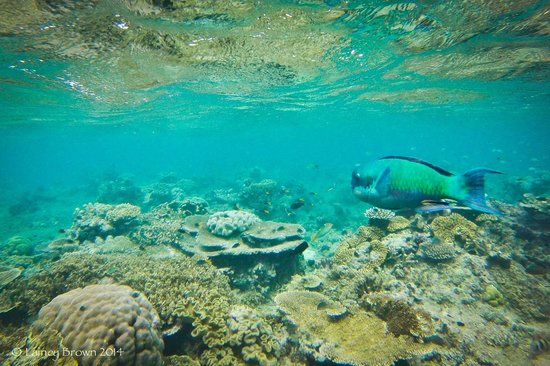 Great Barrier Reef dive with Reef Experience