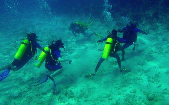 Résultats de recherche d'images pour «centre de plongée blau costa verde»