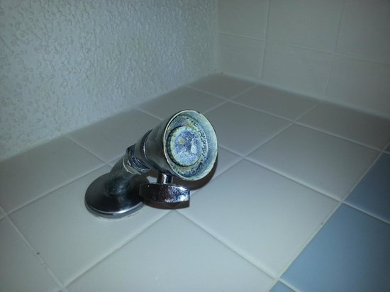 Oak Plantation Resort: Mold on shower head