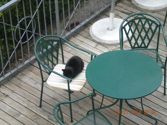Hotel Astoria Salzburg: Resident kitty