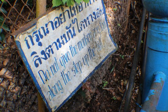 Tiger Cave Temple (Wat Tham Suea): Pay heed! Monkeys will steal stuff.