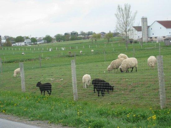AAA Buggy Rides : local farm