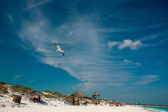 Sol Cayo Largo: La plage de l'hôtel.