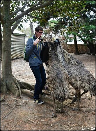 Paul's Place Wildlife Sanctuary : Feeding the Emus