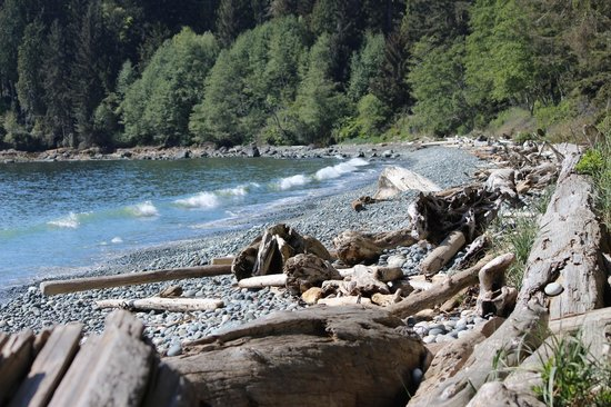 French Beach Provincial Park: A view along the beach