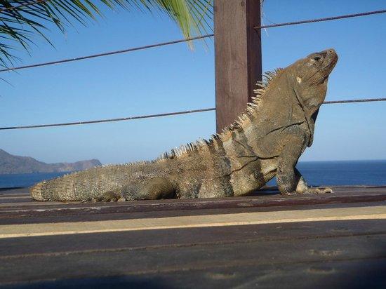 Ocotal Beach Resort : te acompaña a desayunar!l,