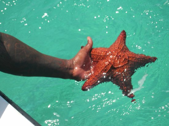 Bay Islands Adventures : Starfish find from the boat, good eyes Ray and Brian!